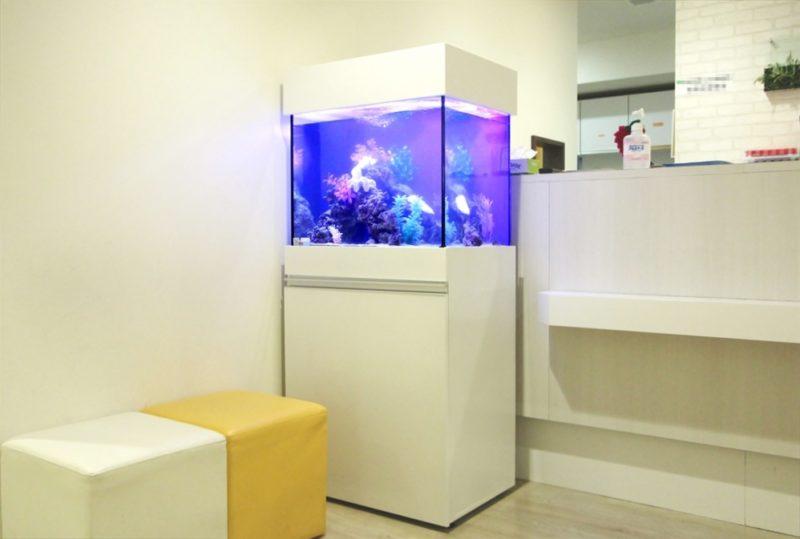 渋谷区 診療所の待合室 60cm海水魚水槽 設置事例 水槽画像4