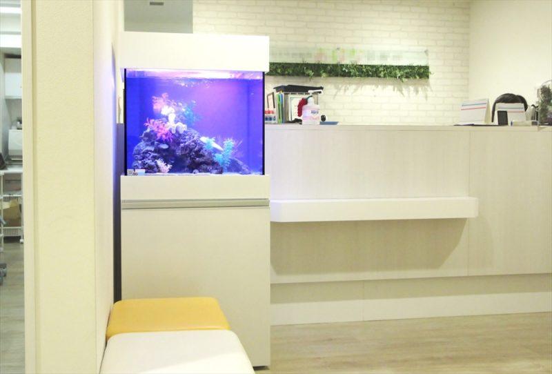渋谷区 診療所の待合室 60cm海水魚水槽 設置事例 水槽画像2