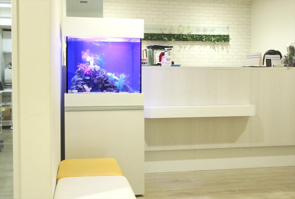 診療所の待合室 60cm海水魚水槽 全体画像