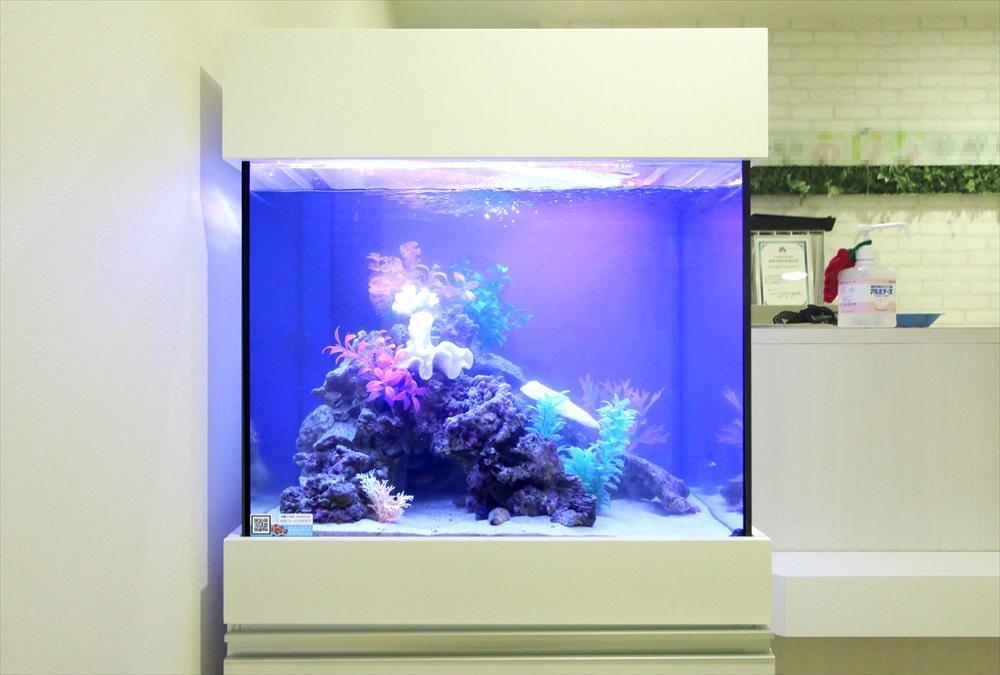 診療所の待合室 60cm海水魚水槽 正面画像