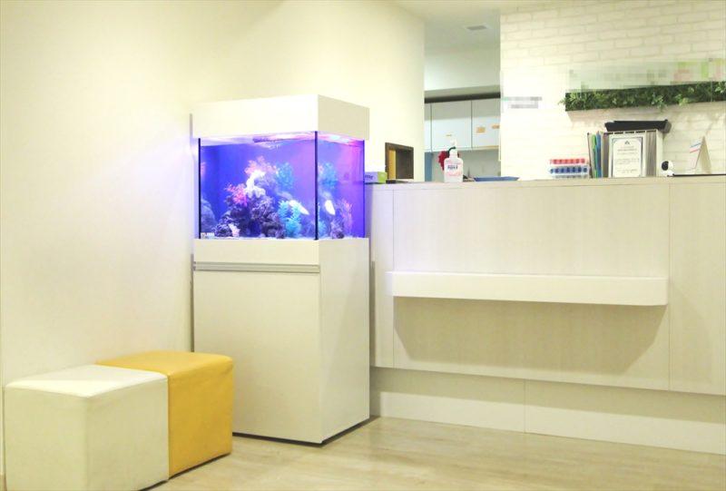 渋谷区 診療所の待合室 60cm海水魚水槽 設置事例 水槽画像1