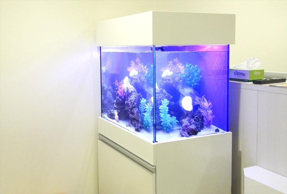 診療所の待合室 60cm海水魚水槽 側面画像