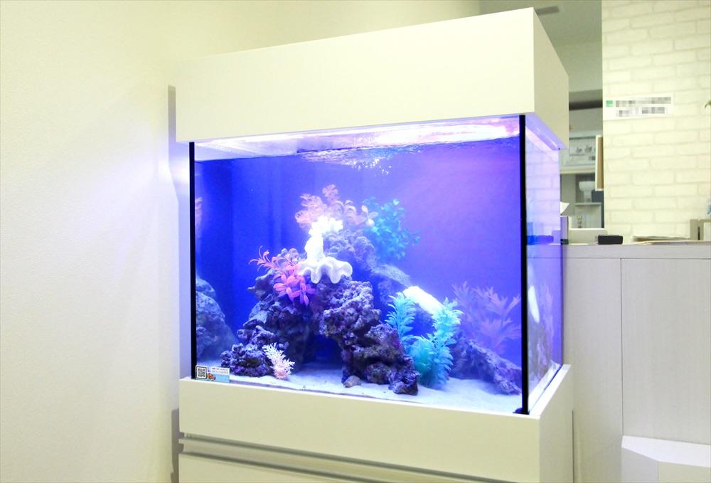診療所の待合室 60cm海水魚水槽 斜めアップ画像