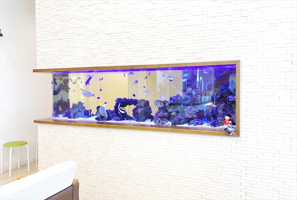 整形外科クリニック 壁埋め込み型 海水魚水槽 全体画像