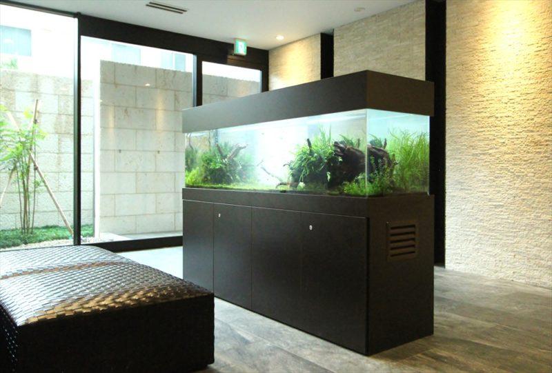練馬区 マンションのエントランス 大型淡水魚水槽 その後 水槽画像1
