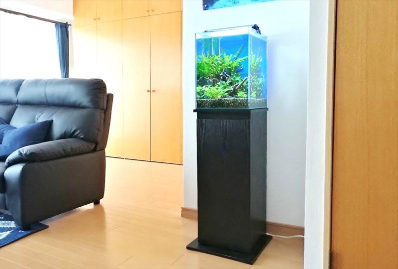 埼玉県 個人宅 30cm淡水魚水槽 お試し水槽レンタル事例 水槽画像1