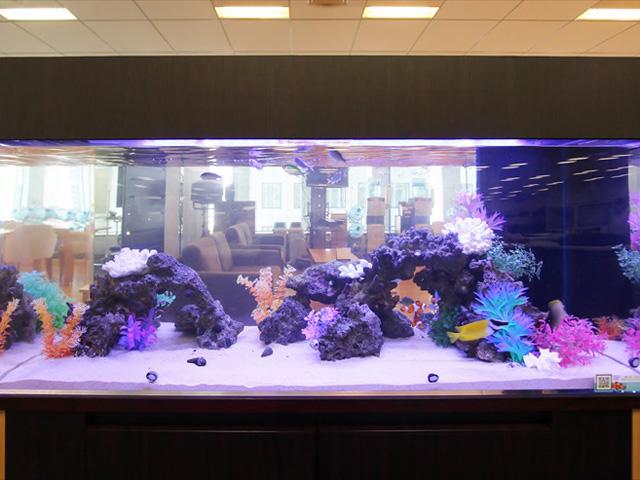 【大型水槽】120cm水槽とは!飼える魚・水草・レイアウトをご紹介!のサムネイル画像