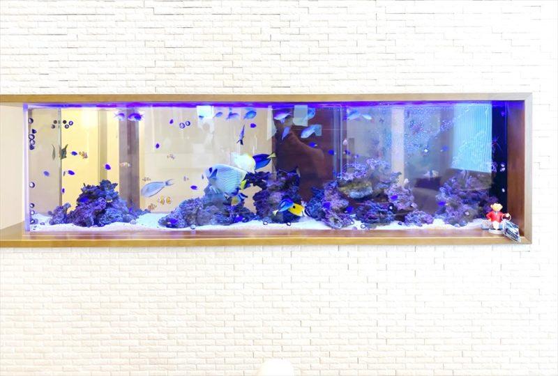 整形外科クリニックの待合室 壁埋め込み型海水魚水槽 その後 水槽画像2
