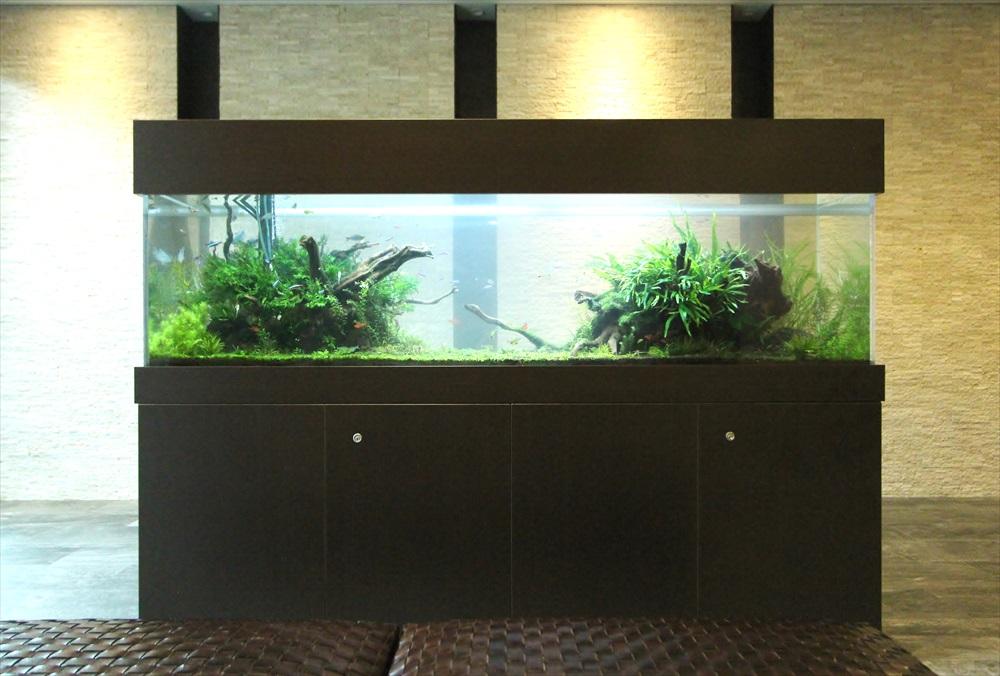 マンションのエントランス 大型淡水魚水槽 正面画像