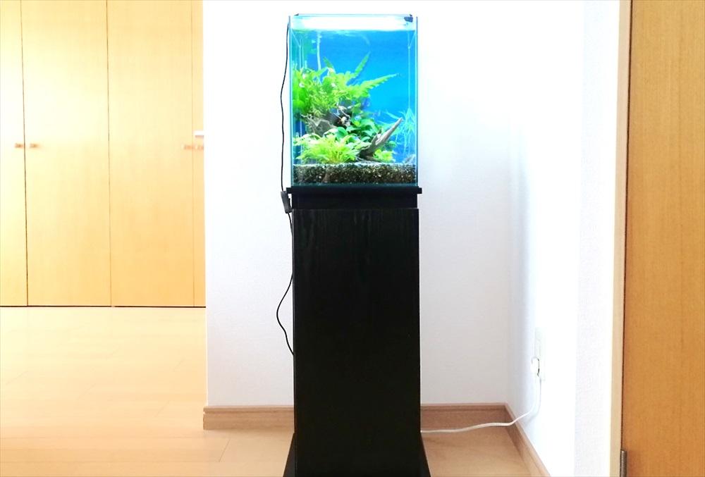 個人宅のリビング 30cm淡水魚水槽 正面画像