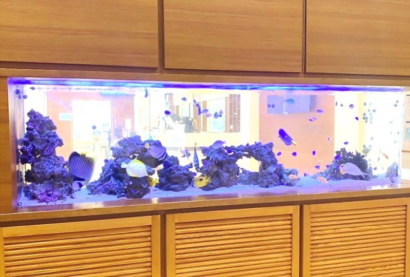 整形外科クリニックの待合室 壁埋め込み型海水魚水槽 その後 水槽画像3