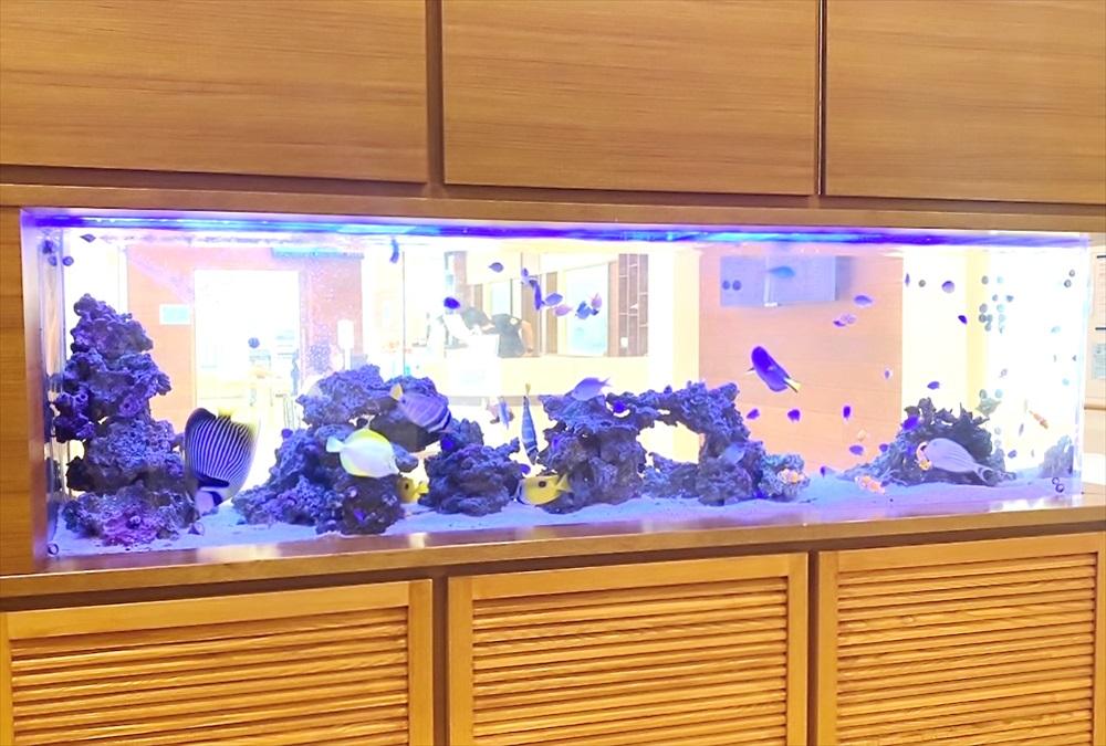 整形外科クリニック 壁埋め込み型 海水魚水槽 斜め画像