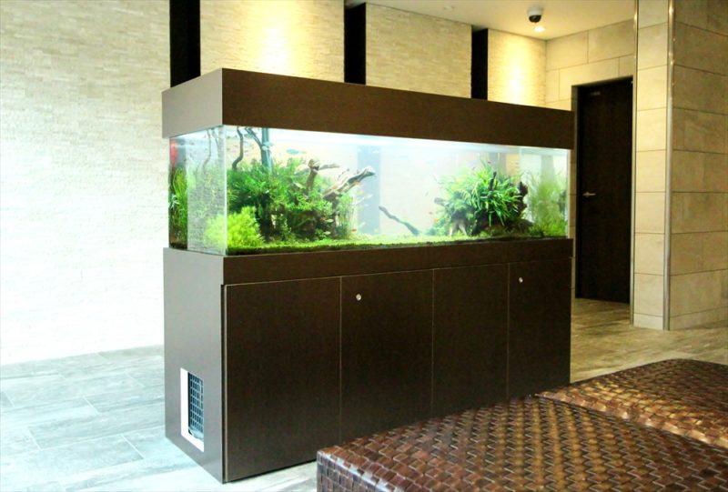 練馬区 マンションのエントランス 大型淡水魚水槽 その後 水槽画像3