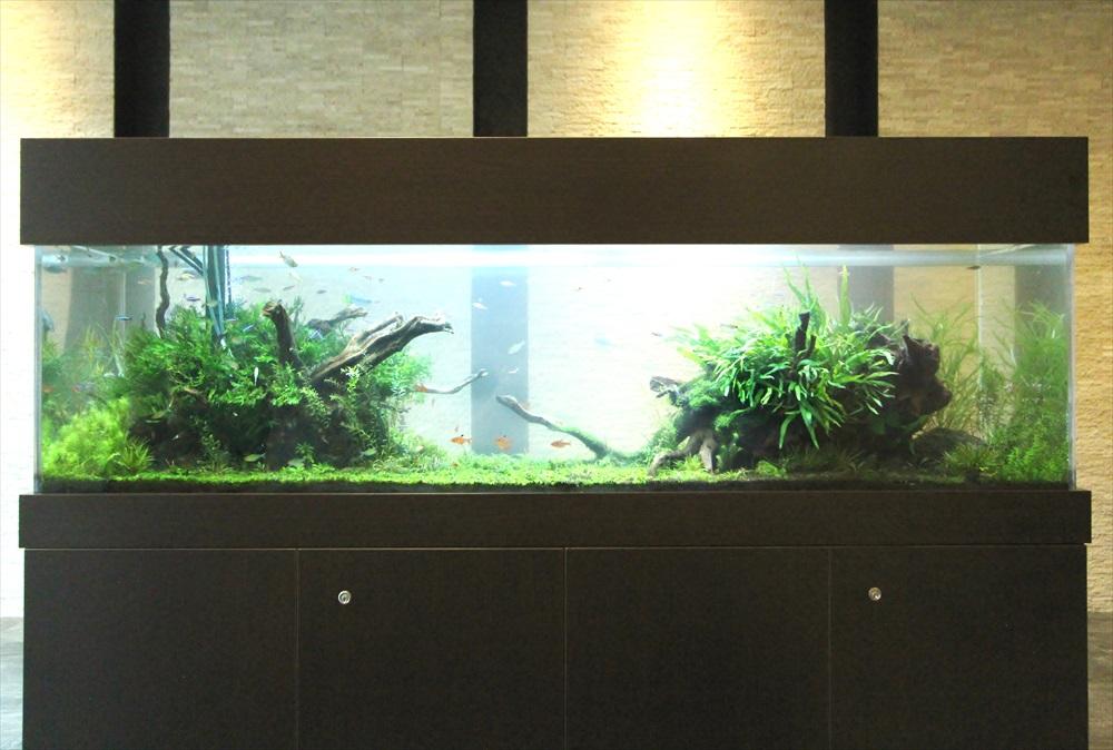 マンションのエントランス 大型淡水魚水槽 正面アップ画像
