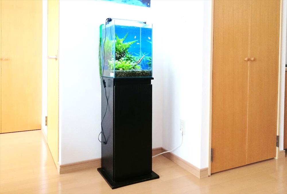 個人宅のリビング 30cm淡水魚水槽 斜め画像