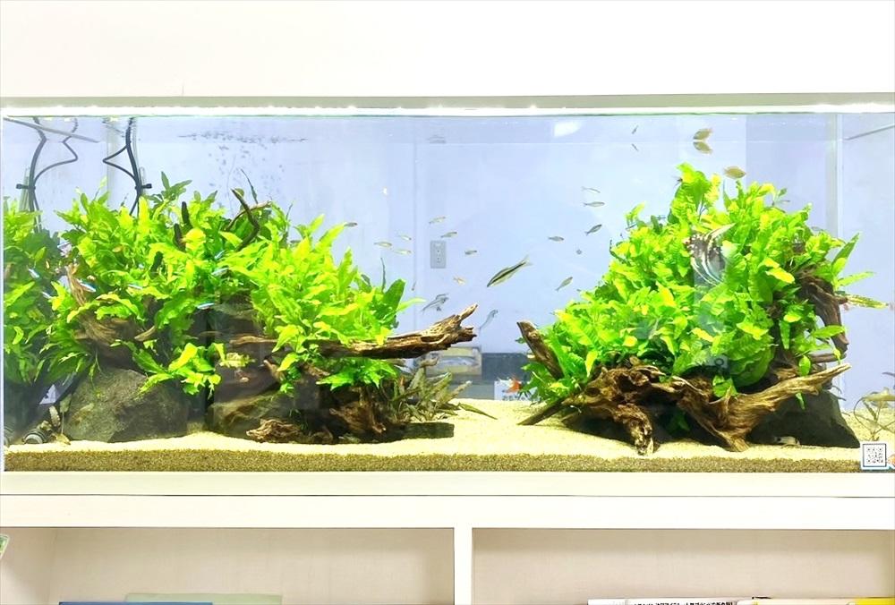 クリニック 壁埋め込み型 120cm淡水魚水槽 生体画像