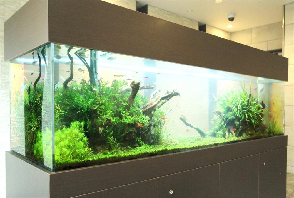 マンションのエントランス 大型淡水魚水槽 斜めアップ画像