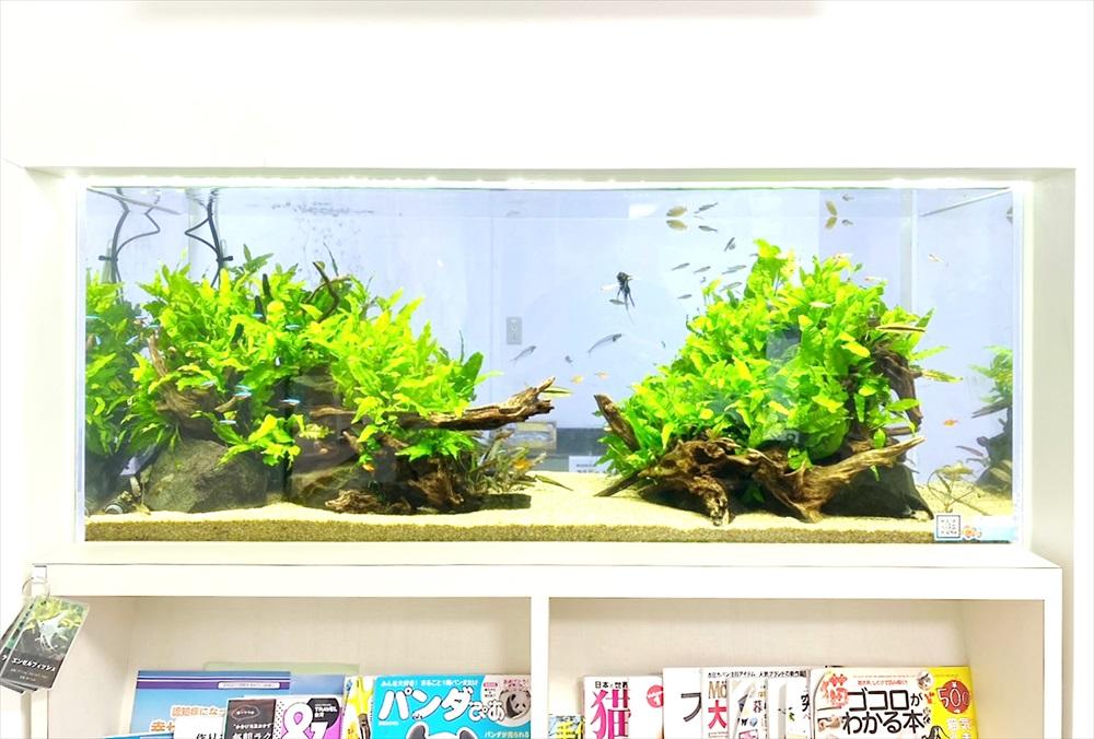 クリニック 壁埋め込み型 120cm淡水魚水槽 レイアウト画像