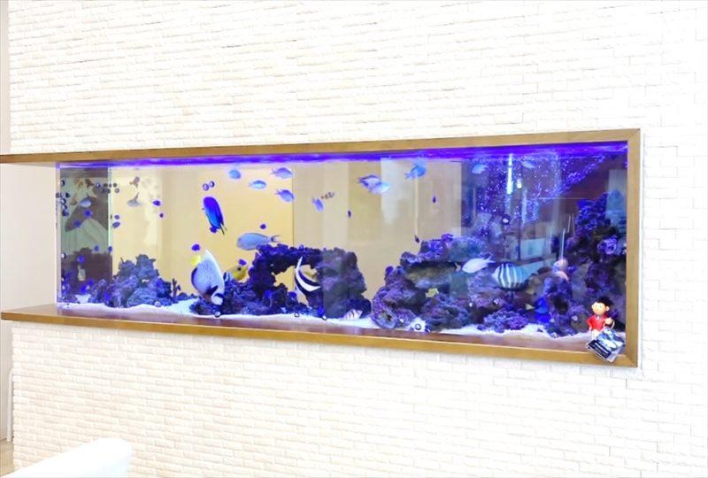 整形外科クリニックの待合室 壁埋め込み型海水魚水槽 その後 水槽画像1