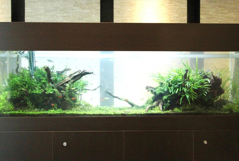 マンションのエントランス 大型淡水魚水槽 レイアウト画像