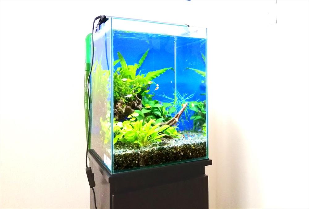 個人宅のリビング 30cm淡水魚水槽 斜めアップ画像