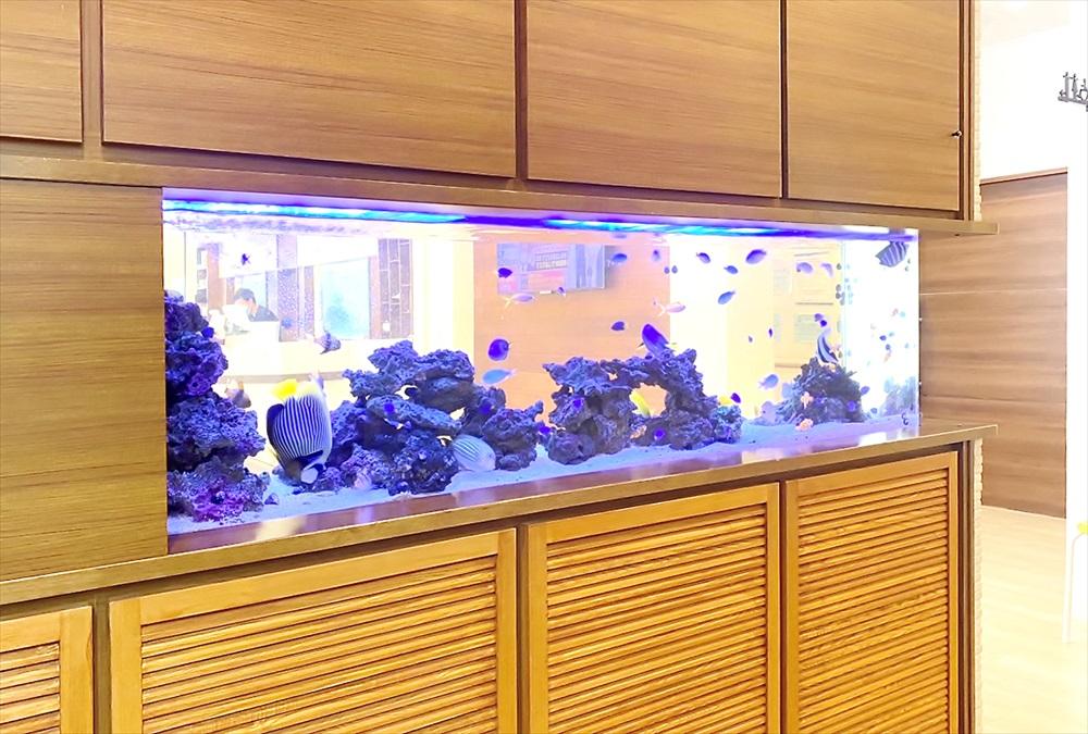 整形外科クリニック 壁埋め込み型 海水魚水槽 生体アップ画像