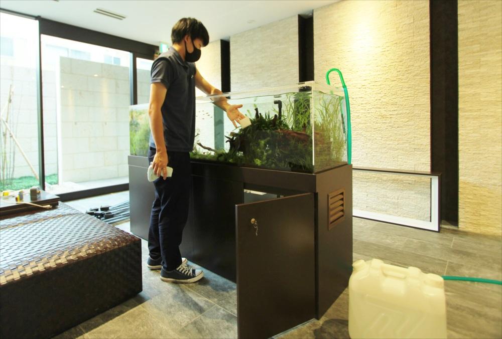 マンションのエントランス 大型淡水魚水槽 メンテナンス画像