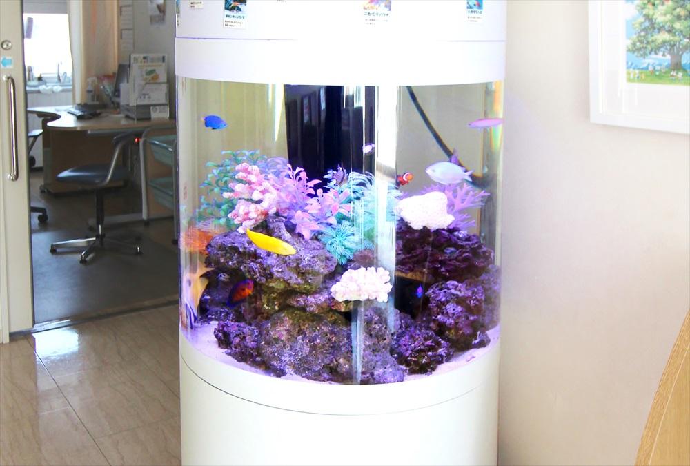 皮膚科クリニック 待合室 円柱水槽 正面アップ画像