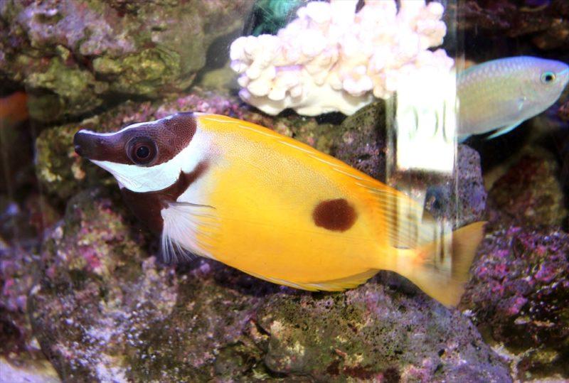 皮膚科クリニックの待合室 円柱海水魚水槽 レンタル事例 その後 水槽画像2