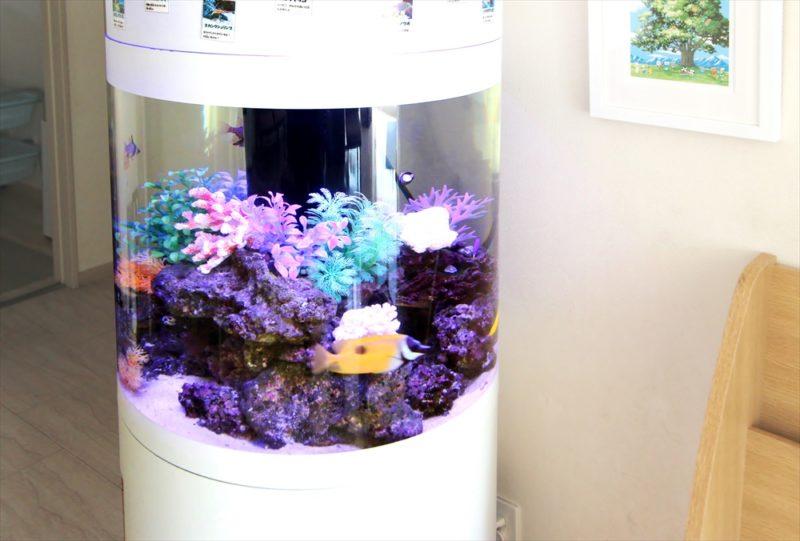 皮膚科クリニックの待合室 円柱海水魚水槽 レンタル事例 その後 水槽画像3