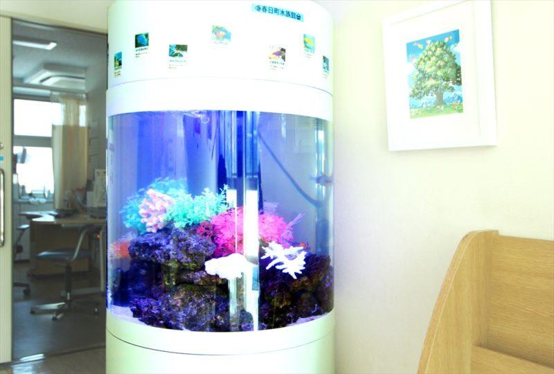 皮膚科クリニックの待合室 円柱海水魚水槽 レンタル事例 その後 水槽画像1