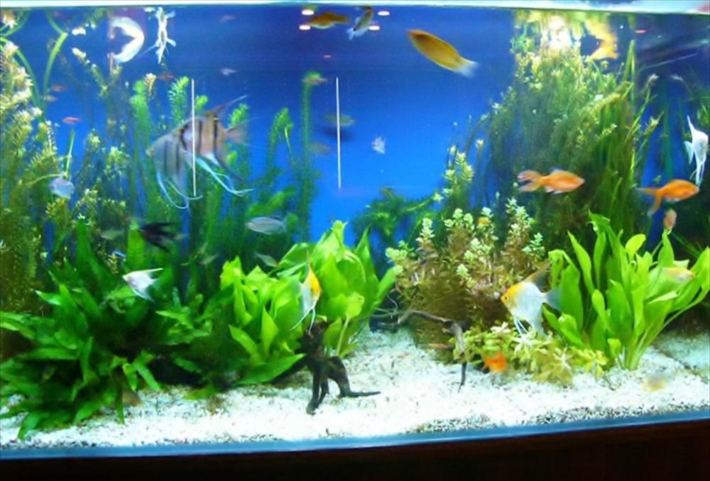 リラクゼーション施設 90cm淡水魚水槽 正面アップ画像
