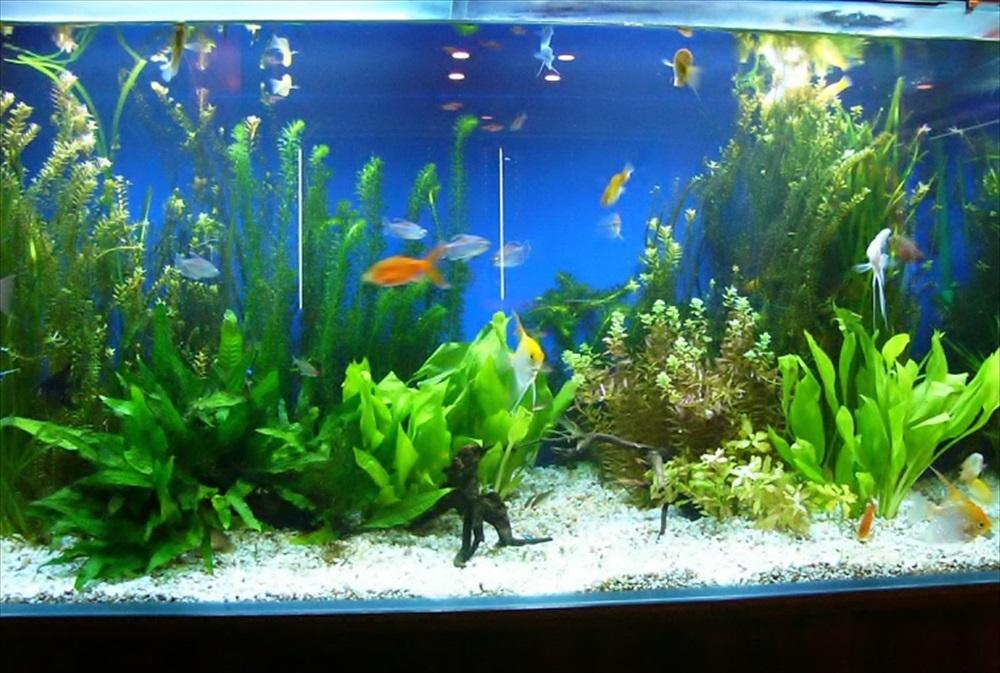 リラクゼーション施設 90cm淡水魚水槽 正面画像