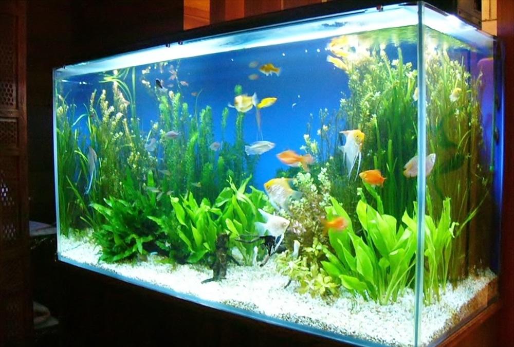 リラクゼーション施設 色鮮やかな90cm淡水魚水槽 設置事例 メイン画像