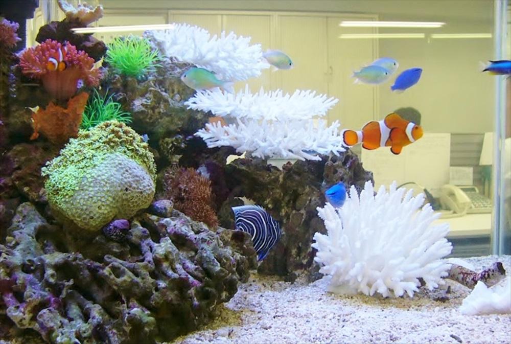 株式会社アタゴ様 本社 60cm海水魚水槽 設置事例 メイン画像