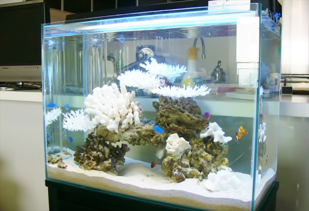 六本木 個人宅マンション 60cm海水魚水槽 設置事例 メイン画像