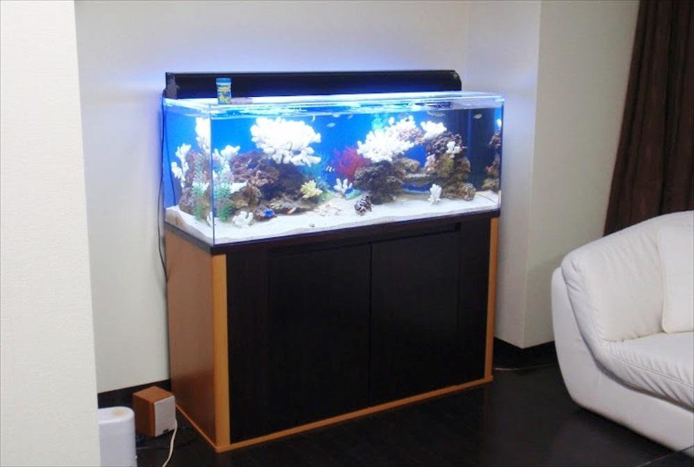 品川区 タワーマンションのリビング 120cm海水魚水槽 設置事例 メイン画像
