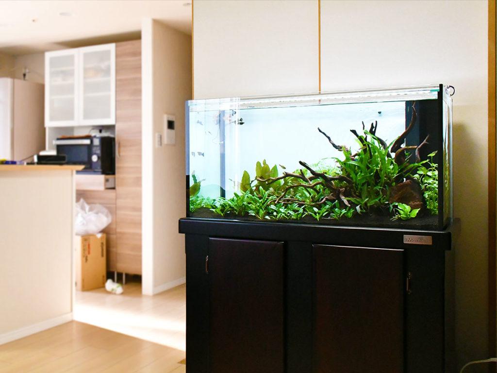 45事例で違いがわかる!熱帯魚水槽を自宅・個人宅に設置したらこんなに素敵のサムネイル画像