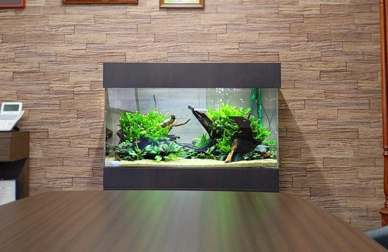 愛知県 オフィス 90cm淡水魚水槽 設置事例 水槽画像5