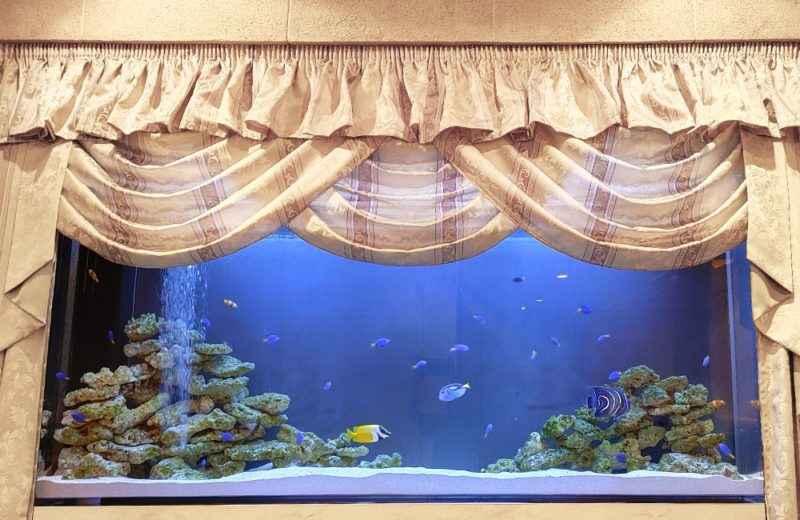 飲食店 200cm大型海水魚水槽 販売・メンテナンス事例 その後 水槽画像3