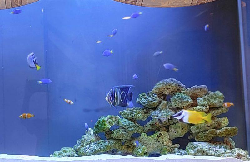 飲食店 200cm大型海水魚水槽 販売・メンテナンス事例 その後 水槽画像5