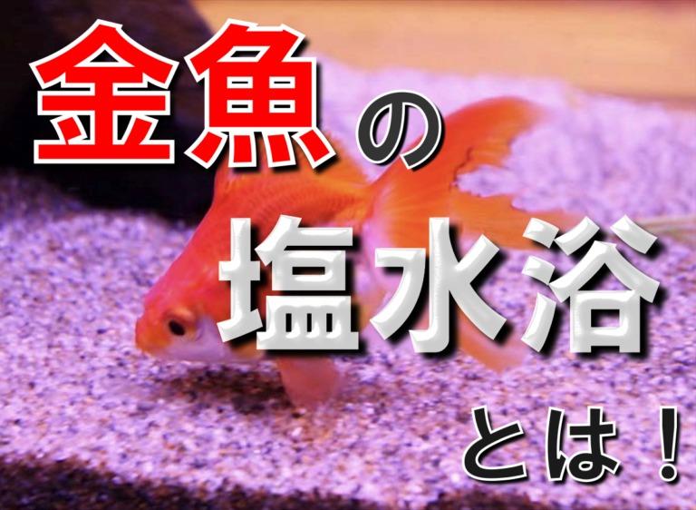金魚の塩水浴とは!塩水浴の効果・濃度・期間・戻し方を徹底解説します 水槽画像