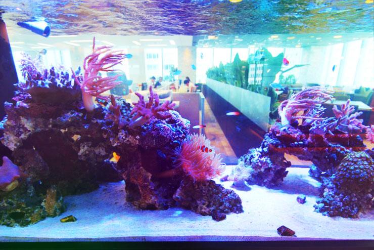 オフィスに熱帯魚水槽を設置したらこうなった!50事例で一目瞭然のサムネイル画像