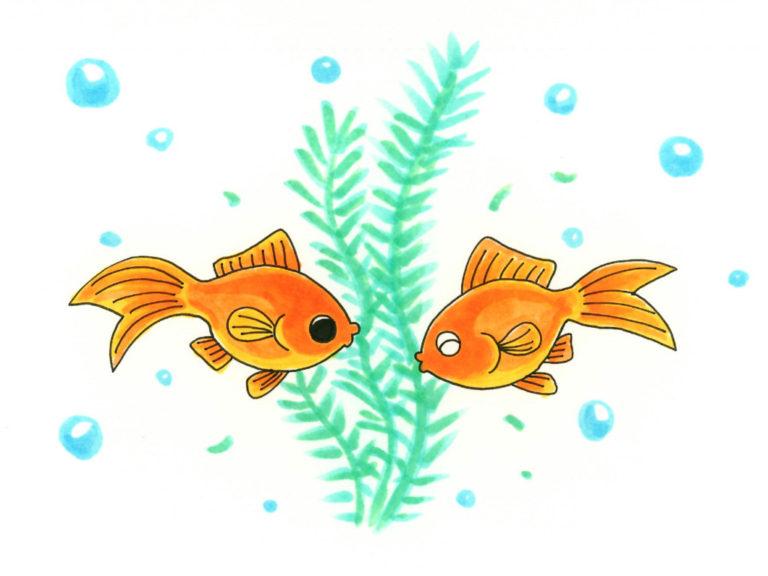 【金魚と一緒に入れる水草・浮き草】水槽プロのおすすめベスト10のサムネイル画像