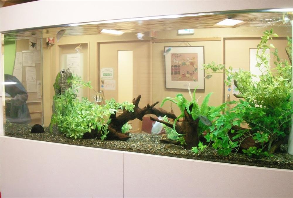 介護老人保健施設かまくらしるばーほーむ様 淡水魚水槽 設置事例 メイン画像