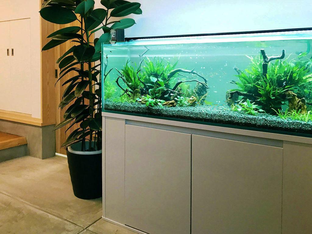 自宅・個人宅に熱帯魚水槽を設置する理由とアクアリウムおすすめサイズのサムネイル画像