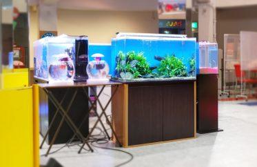 原子力の科学館様 展示水槽 短期レンタル事例