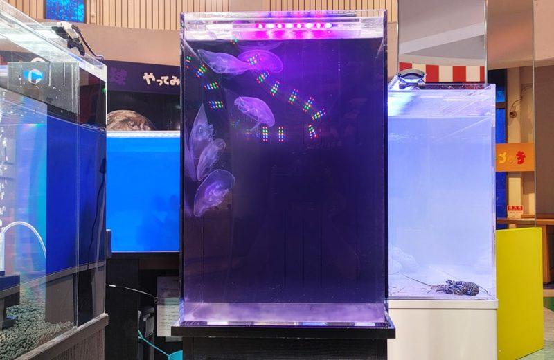 原子力の科学館様 展示水槽 短期レンタル事例 水槽画像4