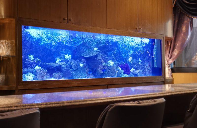 店舗様 埋め込み式 240cm海水魚水槽 メンテナンス事例 水槽画像1