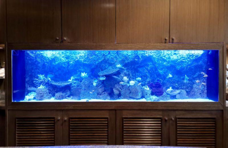 店舗様 埋め込み式 240cm海水魚水槽 メンテナンス事例 水槽画像2